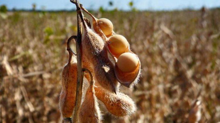 Safra de grãos crescerá 21,8% em 2017 no Brasil, estima IBGE