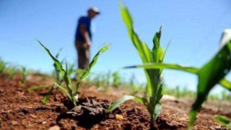 Apenas 15% da área plantada do Brasil possui seguro rural
