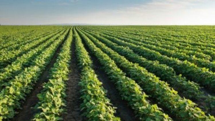Brasil tem apenas 15% da área plantada segurada