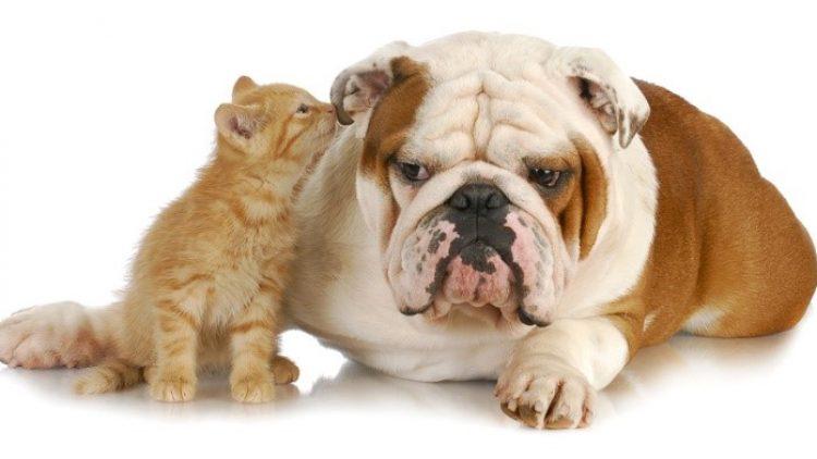 Mercado de seguros de animais domésticos quebrou a marca de 1 bilhão de libras em prêmios brutos emitidos pela primeira vez em 2016, diz GlobalData