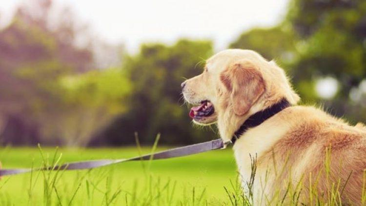 Seguro de animais: últimos dias para o envio de sugestões