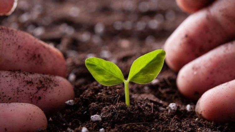 Seguros rurais cresceram 15% até novembro