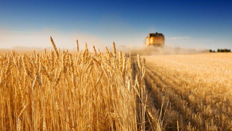 Seguro rural atinge 159 mil hectares da área plantada em Santa Catarina