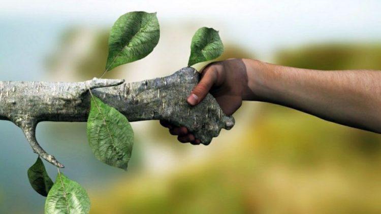 Seguro ambiental obrigatório aprovado pela nova lei será um diferencial estratégico para as empresas