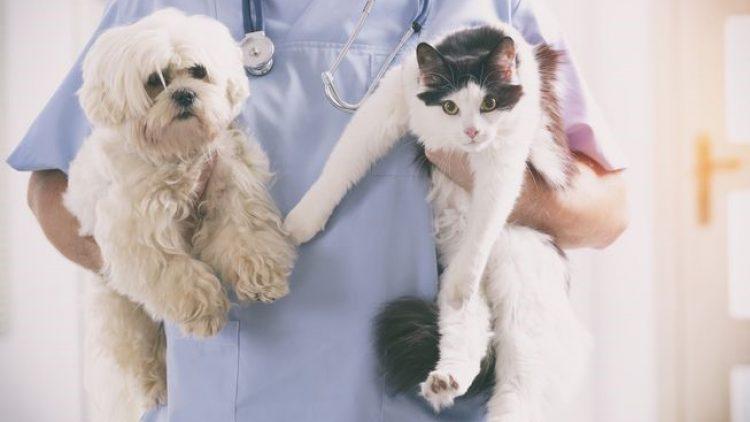 SulAmérica oferece dicas para bem-estar de pets e ressalta assistência especial para cães e gatos
