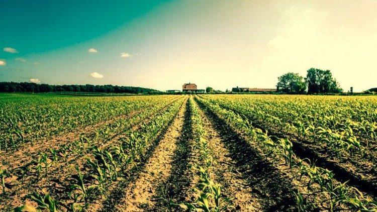 Seguro agrícola indeniza produtores rurais do Mato Grosso do Sul