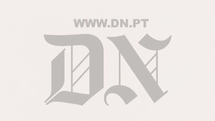 Associação defende áreas florestais agrupadas para minifúndio do Baixo Vouga