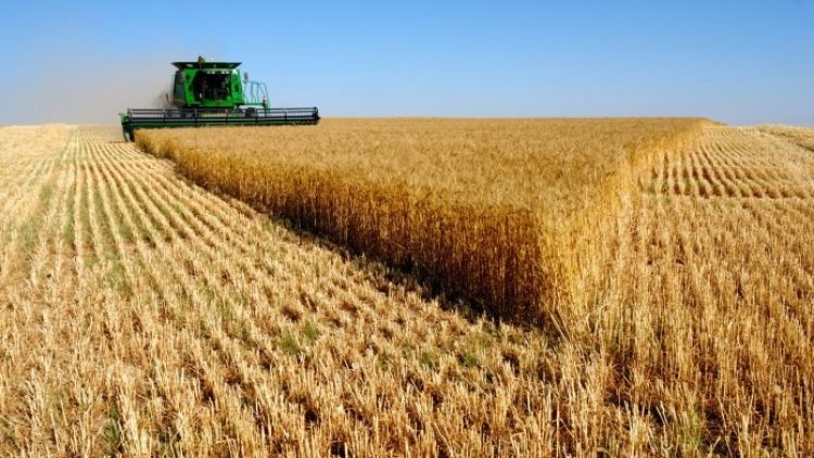 Seguro para agronegócio conquistou R$ 16 milhões