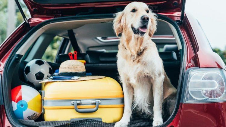 Férias: confira dicas de segurança na estrada para adultos, crianças e pets