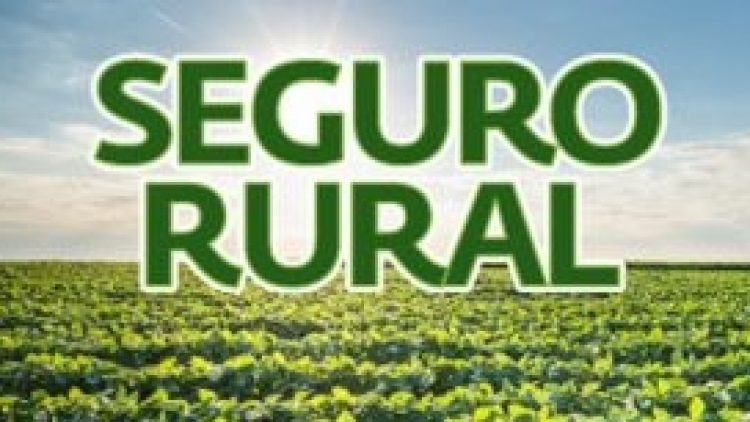 Demora no aviso de sinistro na área rural exonera seguradora de indenizar