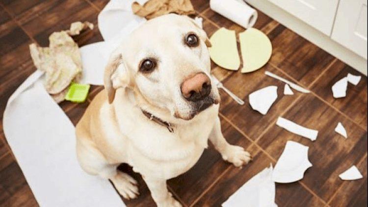 Seguro Residencial da TOKIO MARINE oferece cobertura para danos causados por animais domésticos